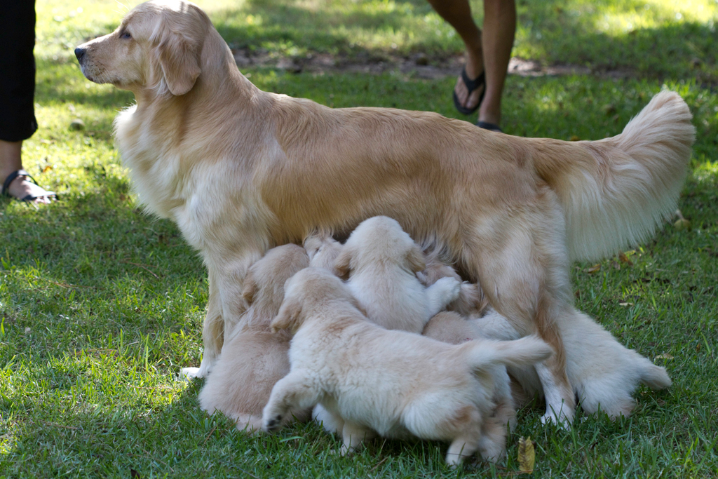 Willow and her Pups