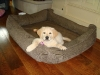 Playpen Dog