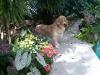 Doggy's Garden