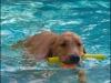 Florida pool time