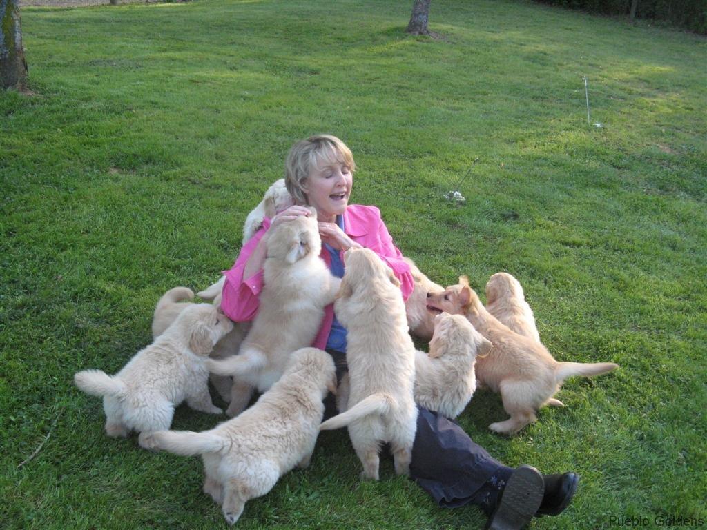Puppy Pyramid