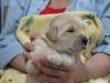 May 2009 Puppies
